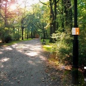 Trasy dla biegaczy